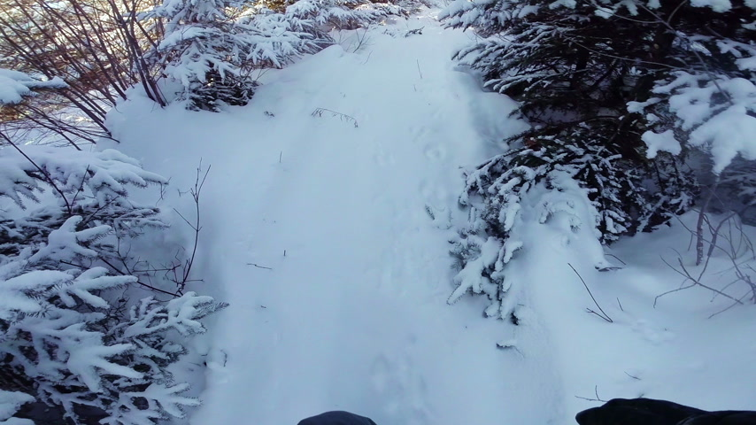 pegadas : Trapper or Hunter POV Following Animal Footprint in Wild Forest Stock Footage