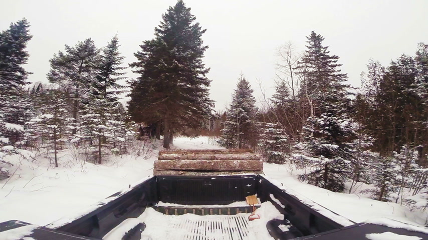 Pickup Truck with a Load of Timber Wood in a Trailer during Winter in Forest
