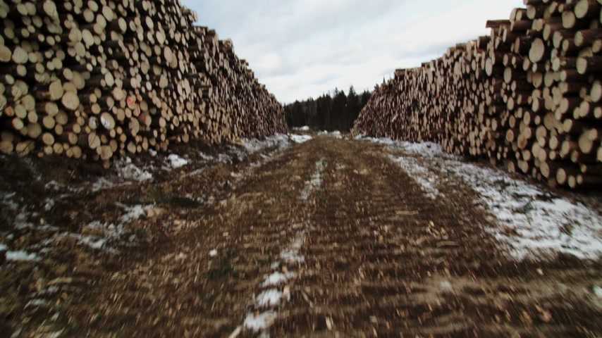 erdészet : Forestry Theme - SteadyCam Panning of a Huge Pile of Spruce and Pine Trees after Clearcut