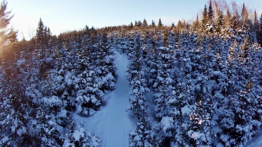Aerial View of Forest and Path during Sunset.