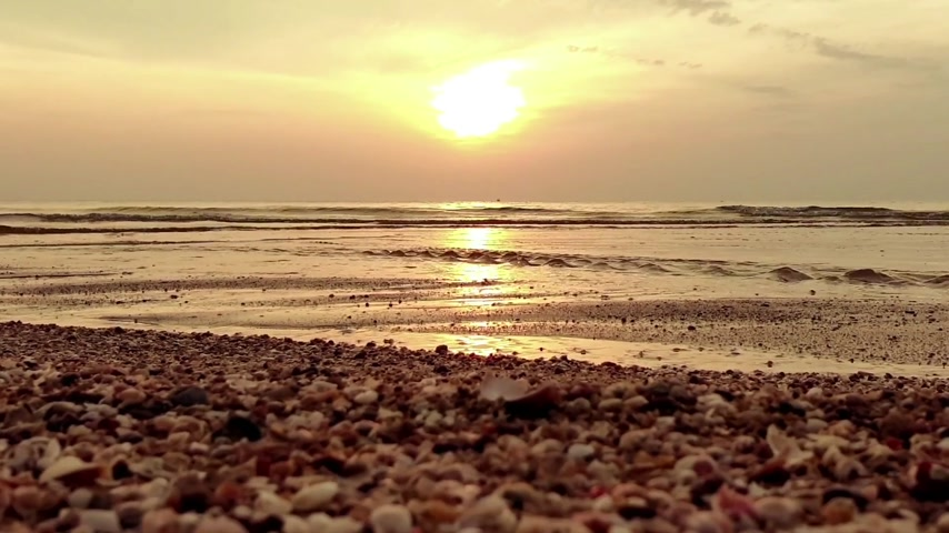 muszla : Beautiful sunrise with mixed seashells on the beach in the morning time