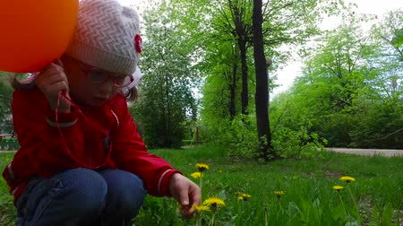 plucks : Child girl exploring dandelion flower. The girl plucks petals from a flower dandelion. One hand girl holding an orange ball. Good spring weather. The daily walk around the city. Stock Footage