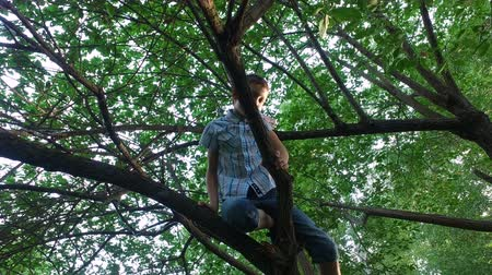 ortam : Teen boy climbs on old tree. The boy is really like to climb on a tree. Old overgrown park. Sunny summer evening.