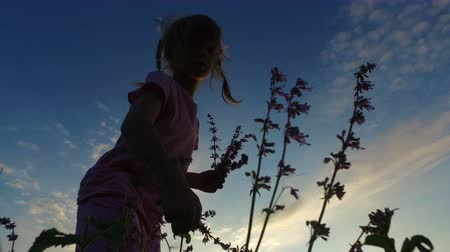 blue braid : Girl child in glasses collects wild flowers in the meadow. She wants to make a bouquet. Summer evening at sunset.