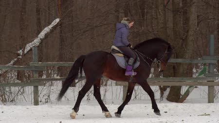bariéra : SLOW MOTION: A girl jockey fulfills riding on a horse. It performs a variety of sports movement and jumping. Training takes place in a small special paddock. A cloudy winter day. Dostupné videozáznamy