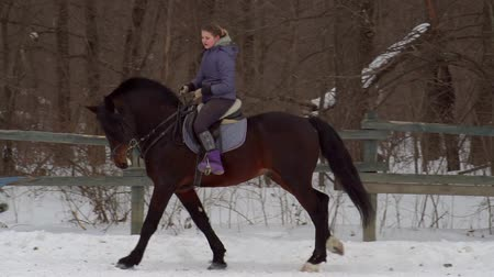 lynx : SLOW MOTION: A girl jockey fulfills riding on a horse. It performs a variety of sports movement and jumping. Training takes place in a small special paddock. A cloudy winter day. Stock Footage