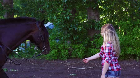 восхитительный : Young blonde woman takes a walk with his horse. A woman is training a horse. Summer sunny evening.