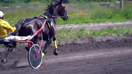 pista de corridas : Ulyanovsk, Russia - July 29, 2018. Competitions for trotting horse racing. A horse trotter and rider. Close-up. Slow motion.