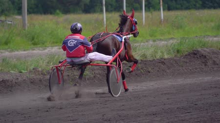 závodní dráha : Ulyanovsk, Russia - July 29, 2018. Competitions for trotting horse racing. A horse trotter and rider. Close-up. Slow motion.