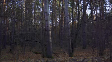 krzew : From a window of a moving car or train. The camera moves past trees, covered trees with green leaves and red leaves. The suns rays make their way through the forest.