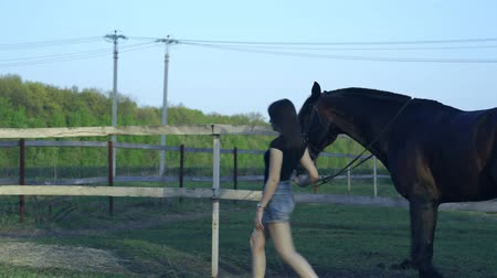 пастушка : T-shirt and denim shorts leads on a leash. Evening walk and grazing horse in the meadow. Summer sunny evening.