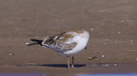 csaj : The bird is sitting on the sand. Closeup.
