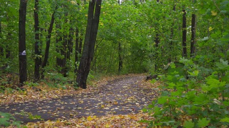 krzew : Walk in the autumn park. The camera moves through the autumn park on a cloudy fall day.