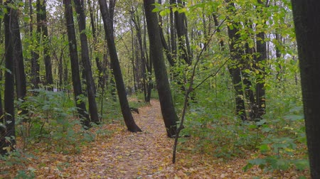 steady cam : Walk in the autumn park. The camera moves through the autumn park on a cloudy fall day.