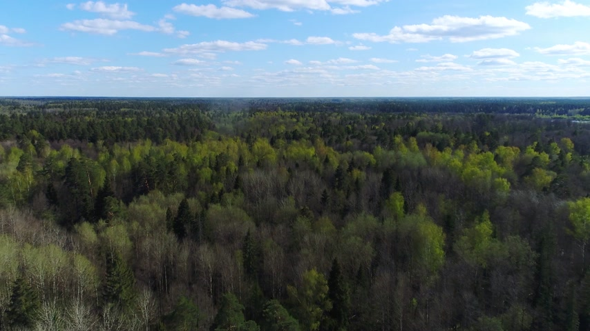 Flying above beautiful spring forest under blue sky near a small city