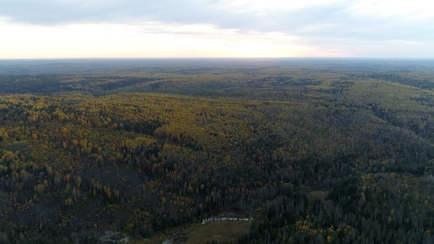 Birds eye view of forest at evening sunset