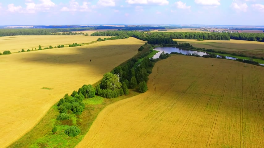 mozdony : Flying above golden wheat field under clouds with river