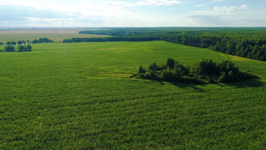 travnatý : Aerial view over green grassy fields in the summer day. Woods in the background