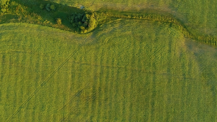 mozdony : Aerial top view of green grassy furrowed field. Fertile meadow in sunny day