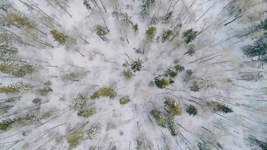günışınları : Aerial View of a Frozen Forest with Snow Covered Trees. Stok Video