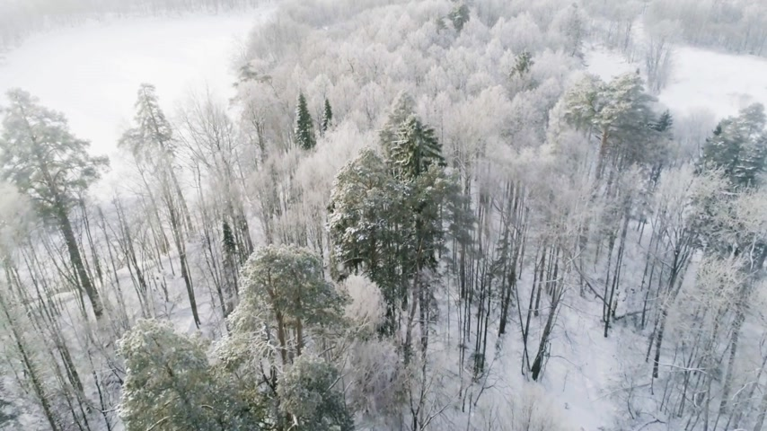finland : Aerial View of a Frozen Forest with Snow Covered Trees. Stock Footage