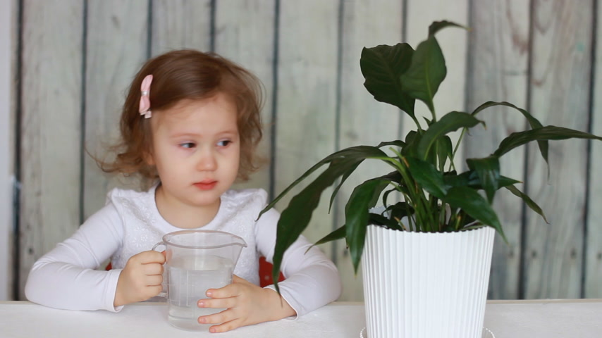 botanikus : The child looks after the house green plant, watering and playing with it. Flower spathiphyllum