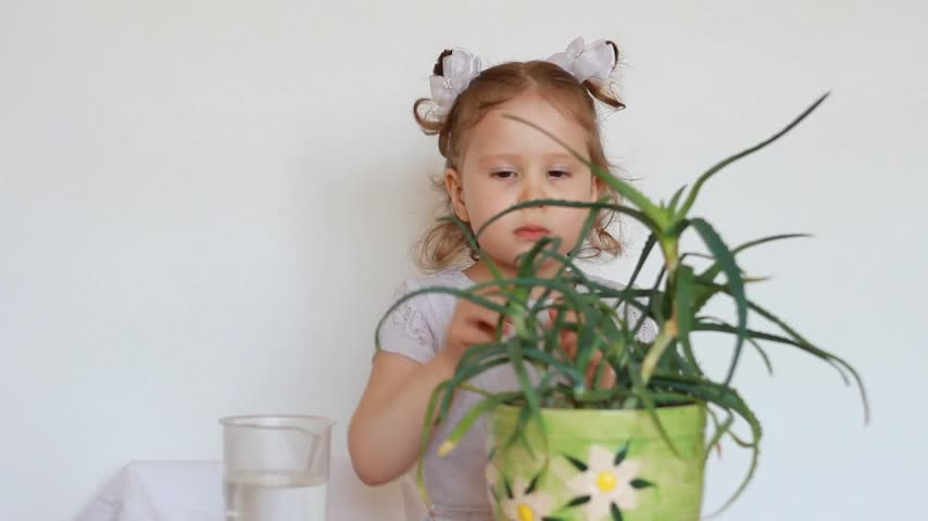 farpa : The flower is aloe. The baby girl pricked about thorns. Child and prickly cactus Stock Footage