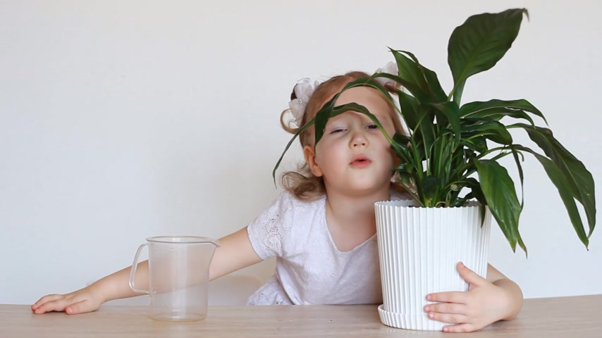 botanikus : The baby girl and green plant. A child watering a flower and playing with it. Spathiphyllum.