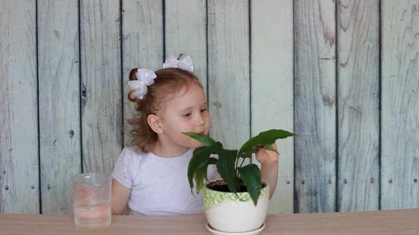 virágárus : The baby girl and green plant. A child watering a flower and playing with it. Spathiphyllum.