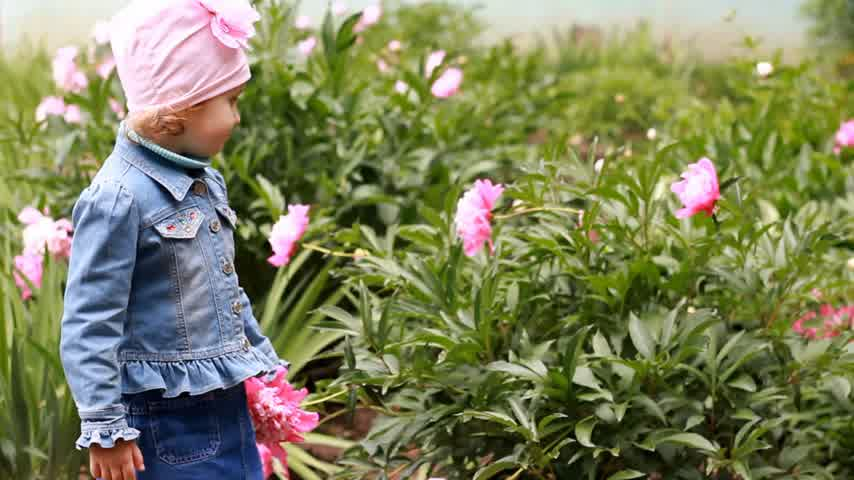 piwonie : Child girl smells the aroma of peony flowers. The kid walks in the garden