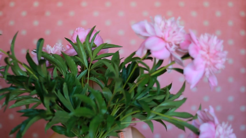 piwonie : Child girl hides in a bouquet with peonies. Baby playing with pink peony flowers