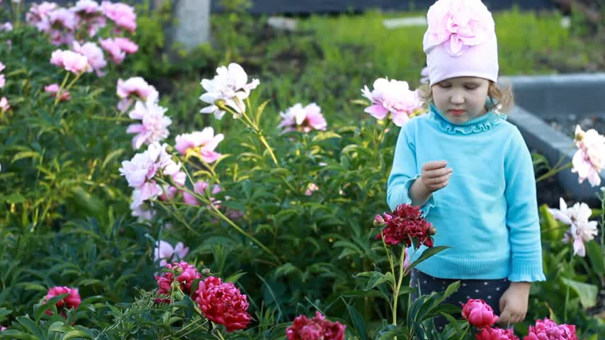 piwonie : Child girl sends kisses in the garden with peonies. The concept of happiness, childhood and love