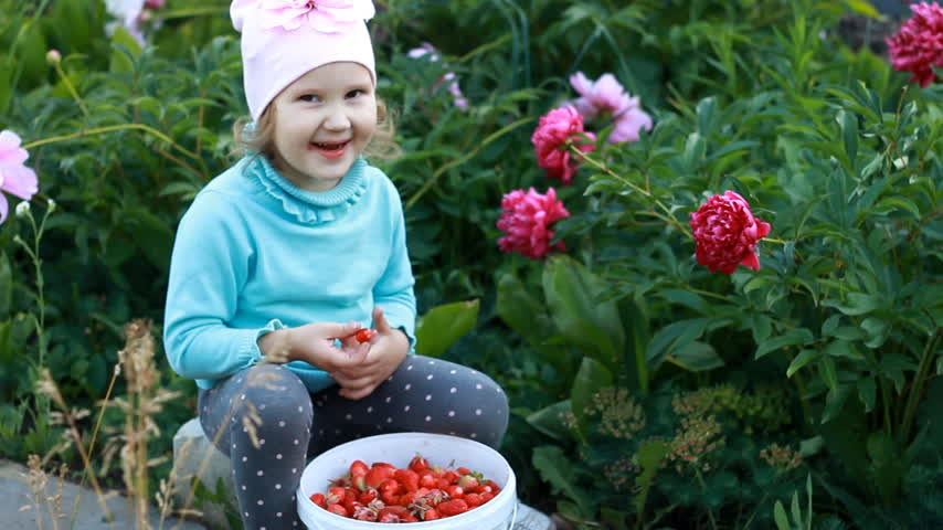 full bucket : Child girl eats harvested strawberry crop. Baby shows the sour taste of the berry Stock Footage