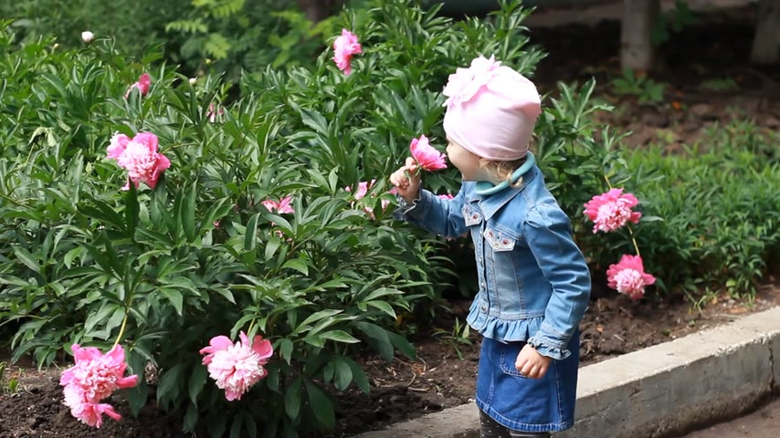 piwonie : Child girl sniffs the aroma of peony flowers and sneezes. Childrens allergies Wideo