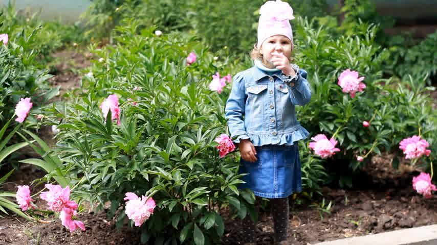pink background : Child girl send air kisses. Garden with peonies and funny baby