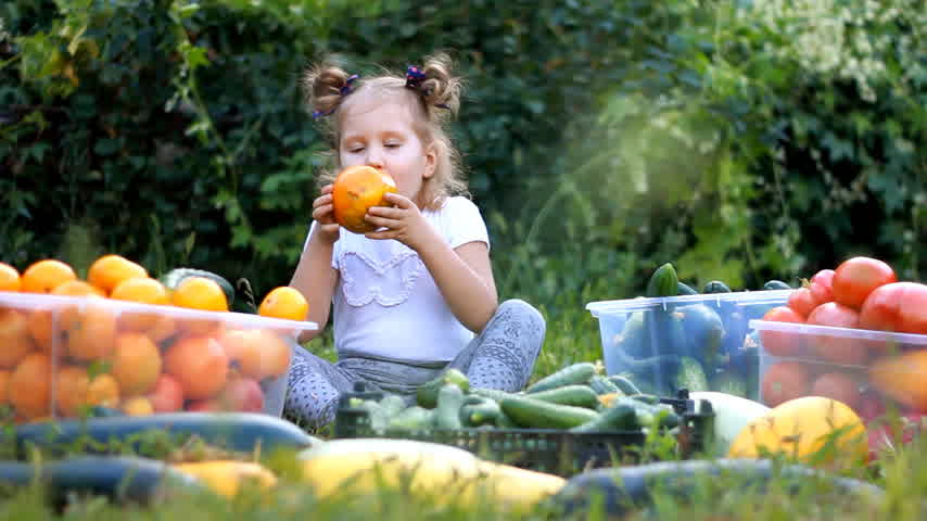 seedlings : Child girl eating vegetables. Harvest of farming. The baby is vegan. Vegetarian food. Ripe tomatoes, zucchini and cucumbers Stock Footage