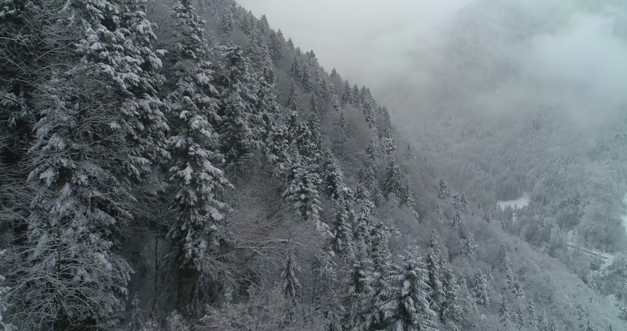 snowy background : aerial view of forest with snow in the montain