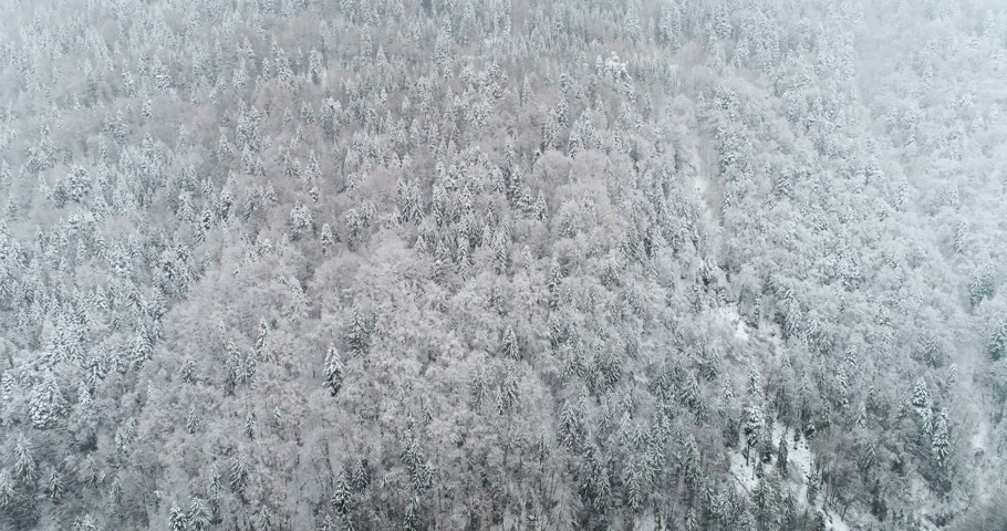 aerial view of forest with snow in the montain