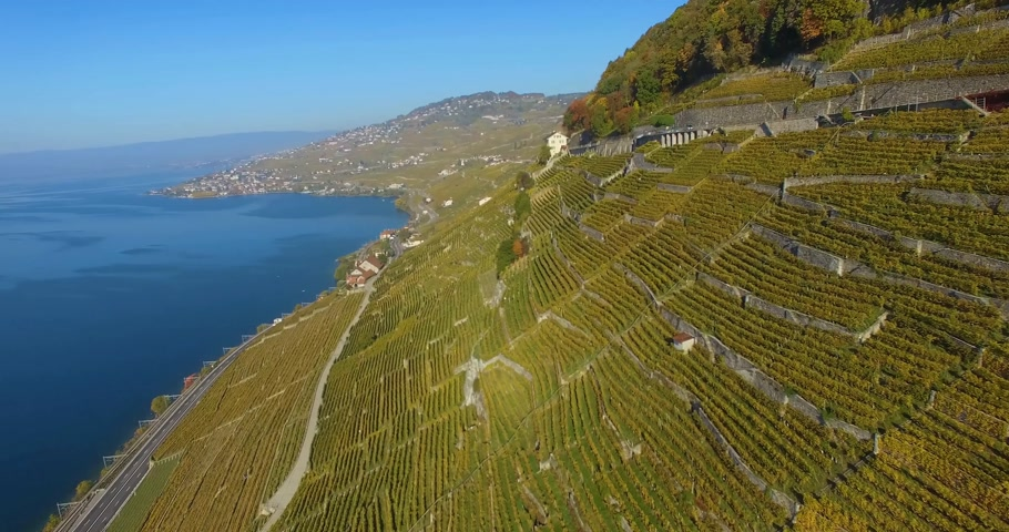 Швейцария : flying over vineyard in lavaux switzerland