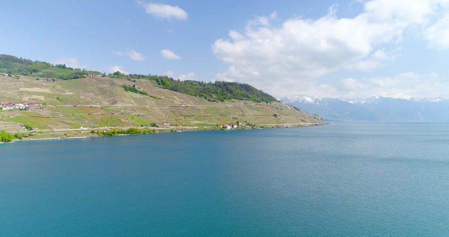 şarap : 4K Aerial footage of Vineyard fields in Terrasses de Lavaux near Lausanne in Switzerland Stok Video