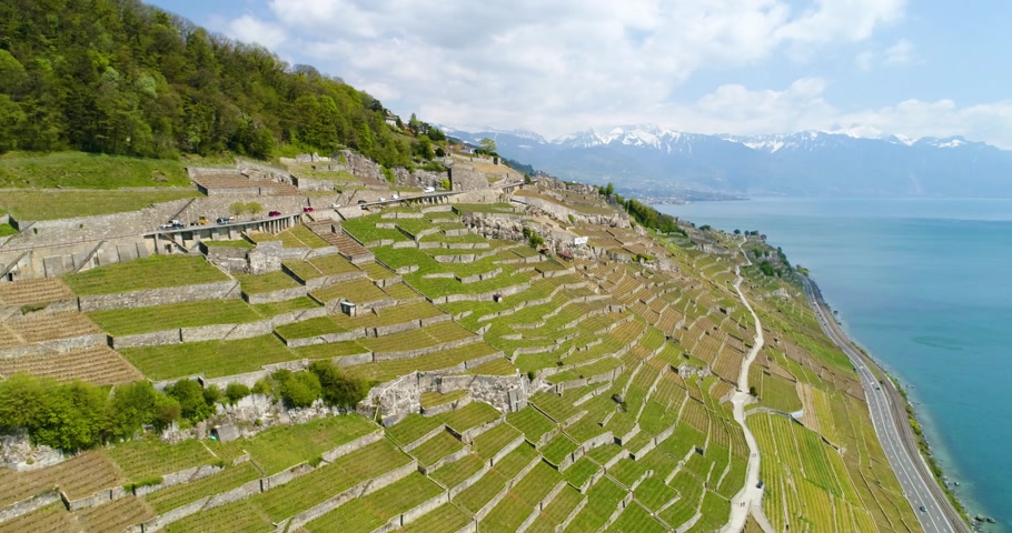 svájci : 4K Aerial footage of Vineyard fields in Terrasses de Lavaux near Lausanne in Switzerland Stock mozgókép