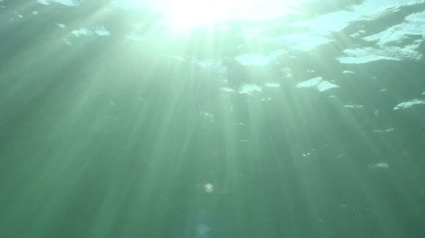 podwodny swiat : Sun is shining through the water surface and create numerous reflexes of sun rays.