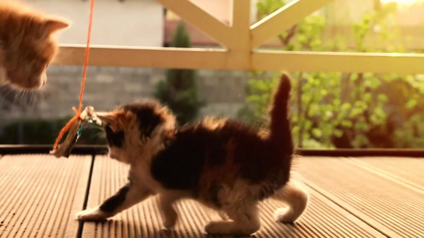 sivilceli : Funny slow motion shot of a ginger kitten jumping on a spotty one