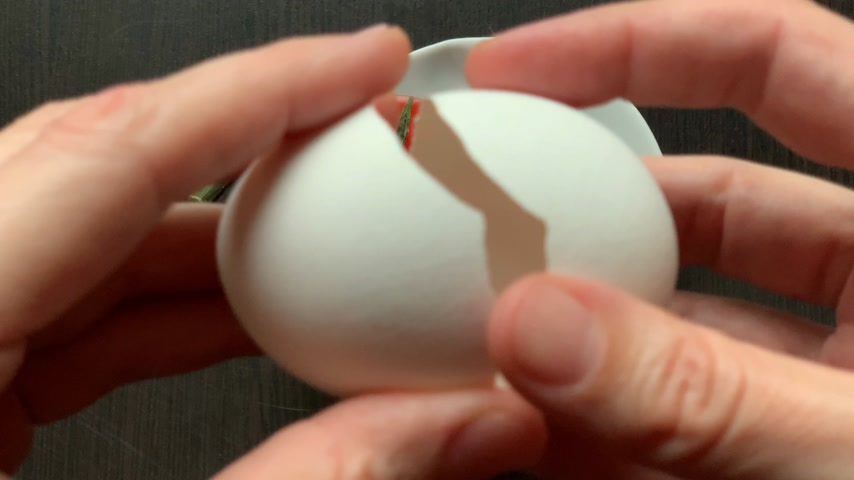 from eggshell tomato is born on a dark background with hands