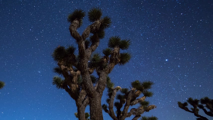 astro : Joshua Trees night moving timelapse. Joshua Tree National Park, California