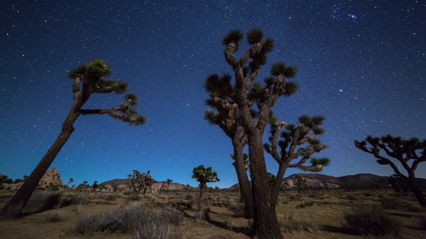 camping : Joshua Trees 's nachts bewegende timelapse. Joshua Tree National Park, Californië