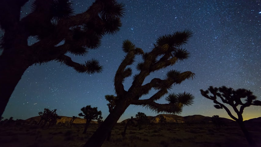 Joshua Trees night timelapse. Joshua Tree National Park, California