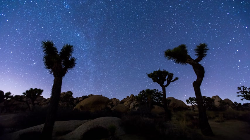joshua : Joshua Trees night timelapse with star trails and zoom in effect, Joshua Tree National Park, California