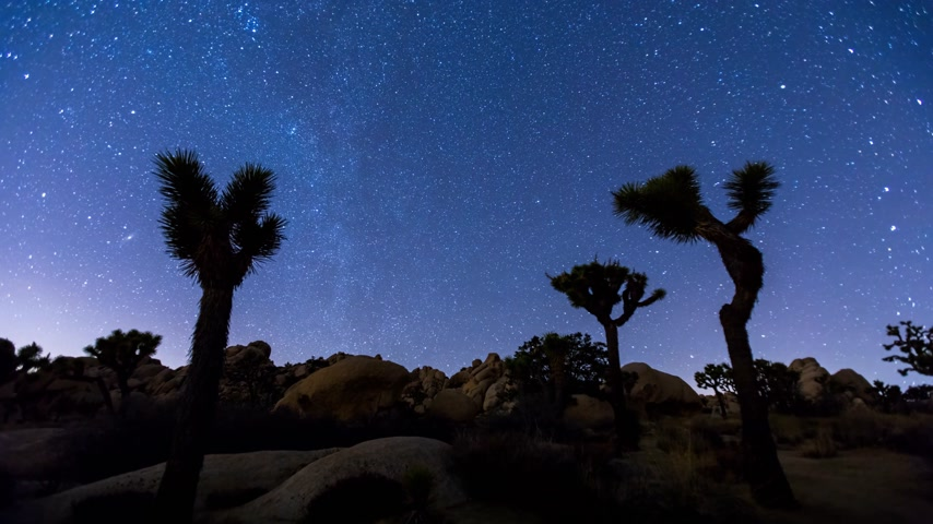 Joshua Trees night timelapse with zoom in effect, Joshua Tree National Park, California