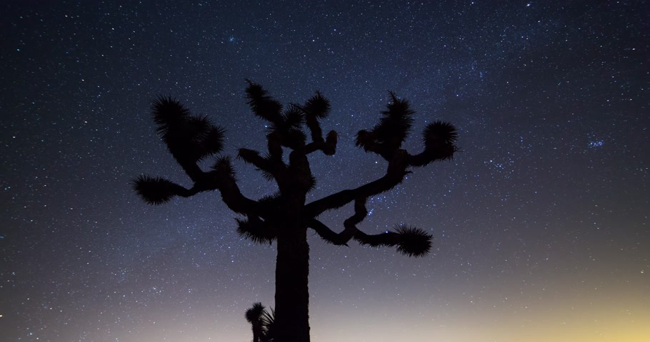 satelliet : Joshua Trees 's nachts bewegende timelapse. Joshua Tree National Park, Californië